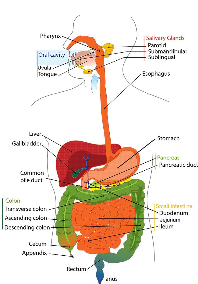 Le cause del bruciore di stomaco