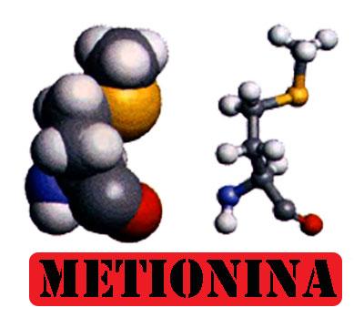Quali sono le funzioni degli aminoacidi
